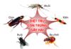 Diệt mối muỗi ruồi kiến gián Diệt côn trùng tại Đà Nẵng