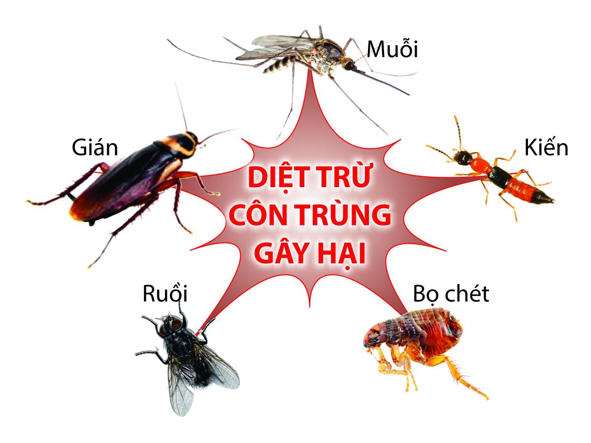 Kết quả hình ảnh cho HINH ANH CON TRUNG GAY HAI