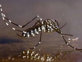 Phun diệt muỗi tại Nha Trang