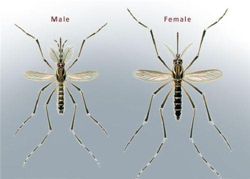 Phun diệt muỗi tại quảng ngãi