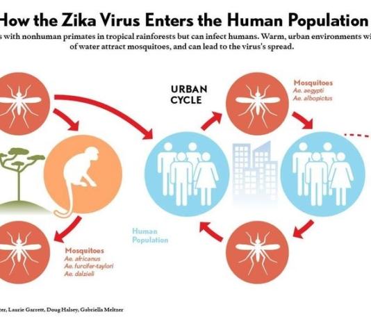 Tỉnh Quảng Nam và chiến dịch ngăn ngừa Virus Zika